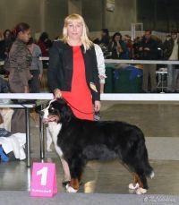 03.11.2012. Интернациональная выставка собак «Россия 2012»