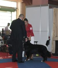 06.10.2012. EuroDogShow – 2012, Bucharest