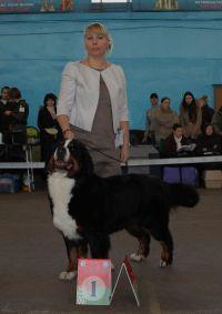 24.11.2012 Международная выставка собак «Беларусь 2012»